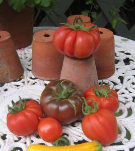 tomato parents
